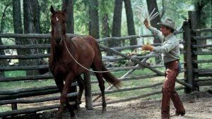 Encantador de Cavalos 1 300x169 7864531 7418748