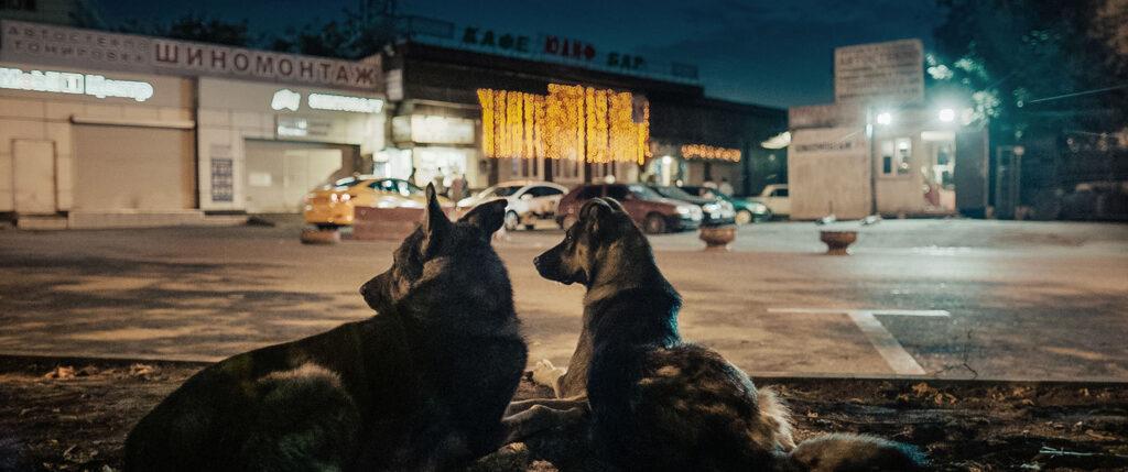 Space Dogs - Documentário (2019)